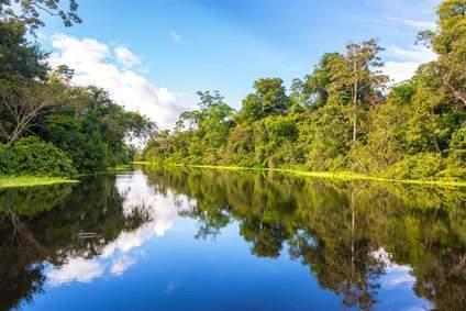 Amazonas Regenwald in Brasilien - er fällt den geplanten Wasserkraftwerken zum Opfer